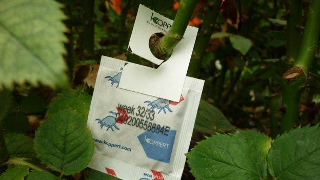 A bag of mites