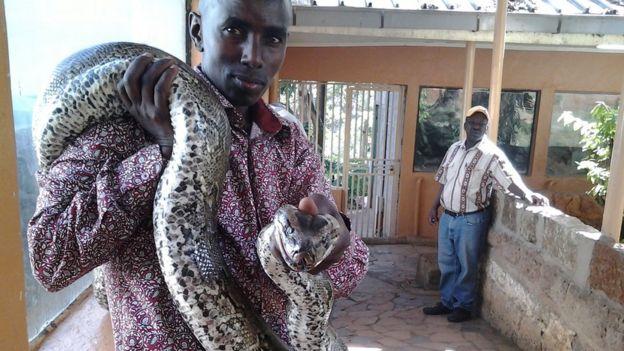 David Musyoka pitonu tutuyor
