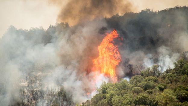 Bosque en llamas en la ladera de una colina