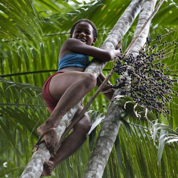Una niña trepando a una palmera donde se ve un gran ramo de açaí