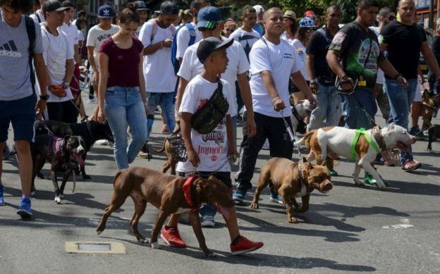 Manifestación en Medellín en defensa de perros