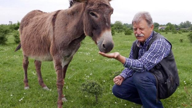 Vukadinović feeds one of his donkeys