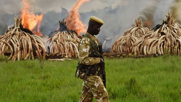 Some countries have destroyed their ivory stocks but some still hold onto them in the hope of future markets