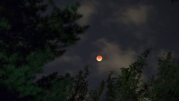 A supermoon rises above trees in Riverside, Connecticut