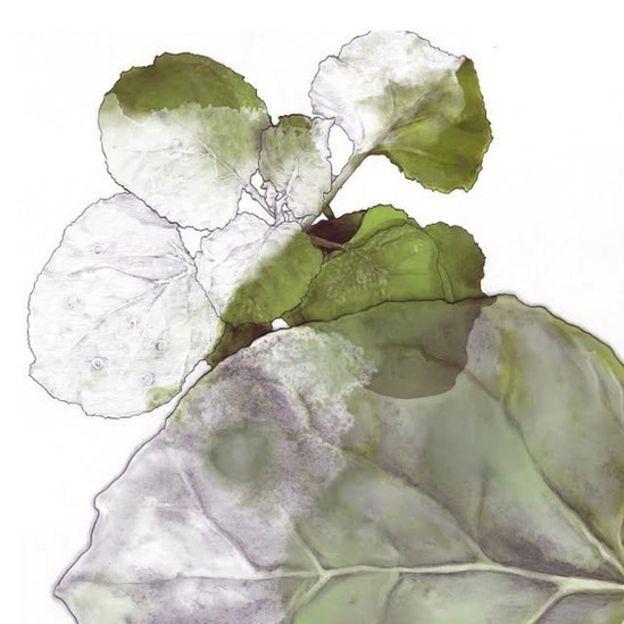 Ilustración de una planta de tabaco