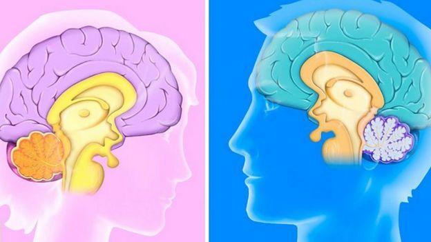 Gráfico de cerebro de hombre y mujer