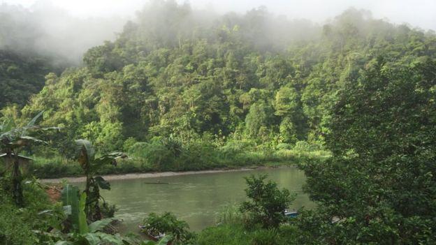 Selvas de Colombia