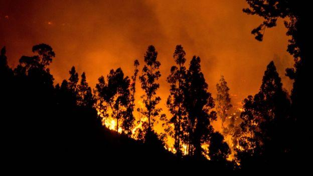Bosque siendo consumido por las llamas.