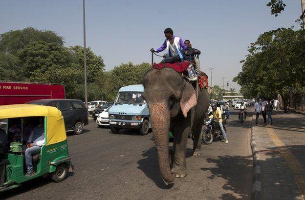 An elephant walking amid the traffic in a Delhi street