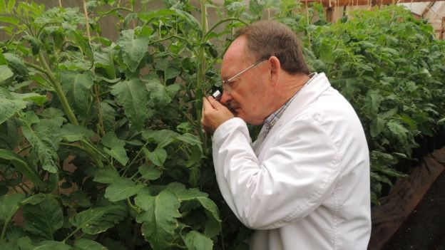 Henry Wainwright checking plants for pests
