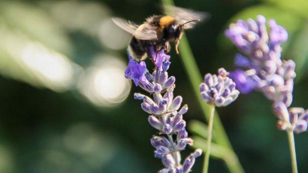 Una abeja sobre una flor