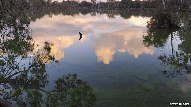 Algae along the Murray River at Albury on May 26, 2009