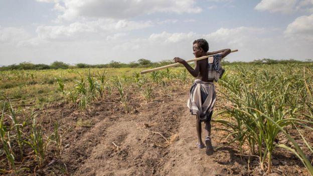 An Afar boy walks through failed crops and farmland in Magenta area of Afar, Ethiopia, on Tuesday, Jan. 26, 2016.