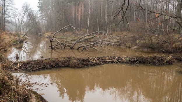afforestation prevent flooding case study