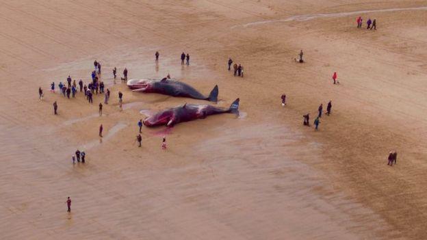 Мертвые киты в Гибралтар Пойнт