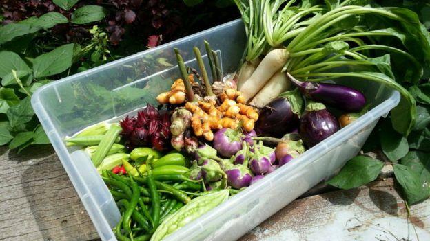 Edible Garden'dan taze sebzeler