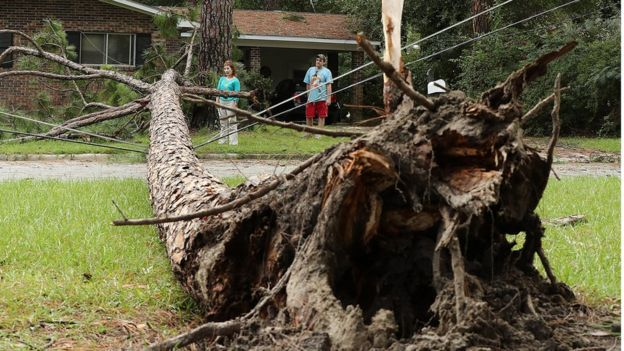 Chris Boland, rear right, whose home just missed a direct hit from a downed pine tree over the power lines, and Julia Tyson look over the aftermath Tropical Storm Hermine Friday, 2 September 2016, in Valdosta. Georgia.