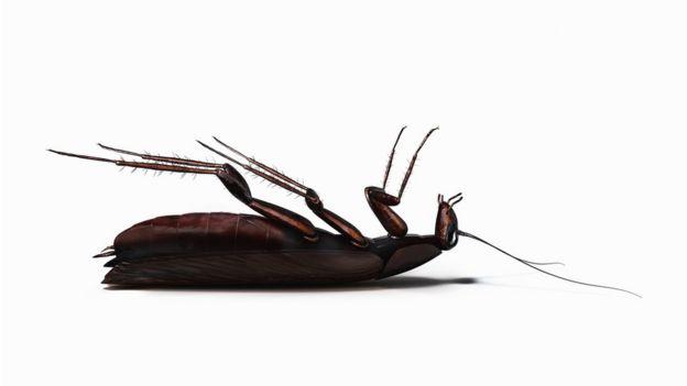 ¿Por qué casi siempre que encuentras una cucaracha muerta en tu casa está patas para arriba?
