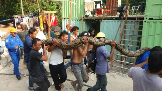 Snake being carried