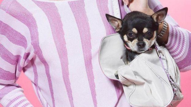 Cachorro pequeno em bolsa