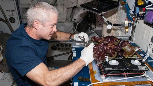 Cultivando lechugas en la ISS