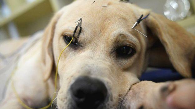 Las extravagantes imágenes de perros y gatos en sesiones de acupuntura