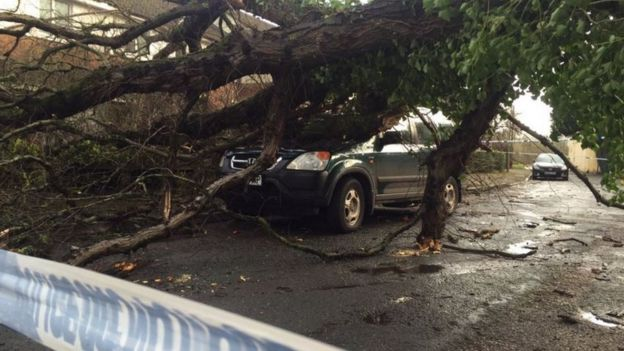 Tree fallen on car in Exeter