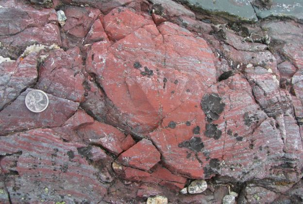 Fosillerin bulunduğu kayalar