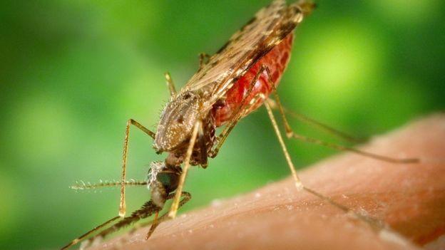 _95188890_mosquito-1016254_1280