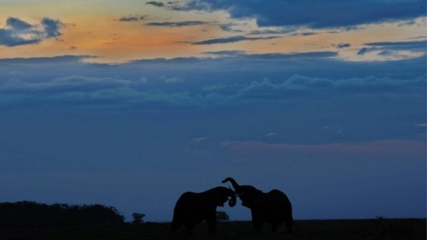 Elephants in Amboseli National Park, file picture