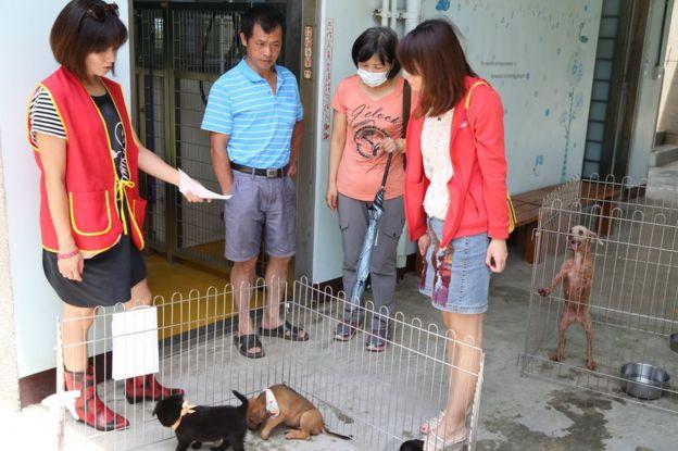 台湾では近年、捨て犬の里親になる人が増えている
