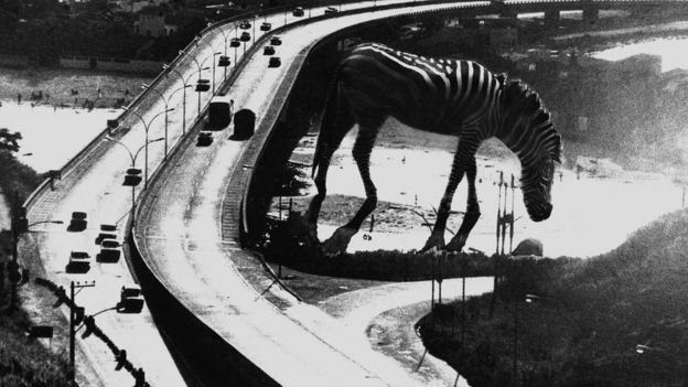 The Big Zebra, de Gil Josquim