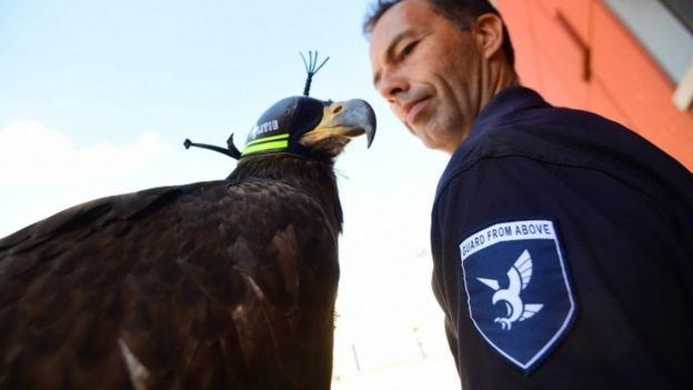 Aquila e ufficiale
