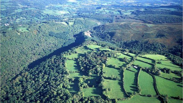 Hisley wood in Devon