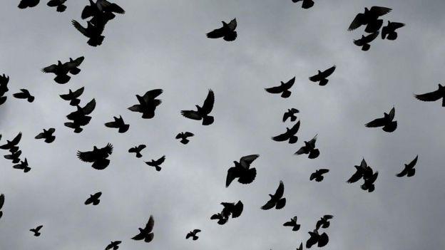Palomas en el aire