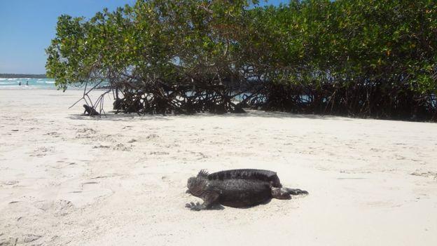 Bahía Tortuga.
