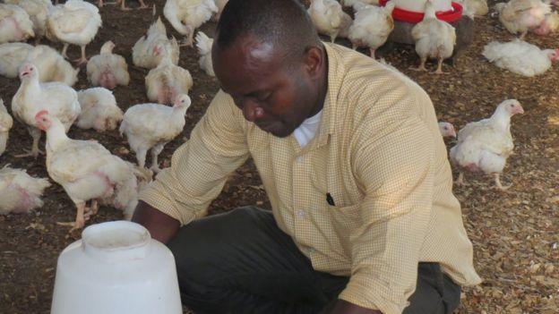 Napoleon Oduro tends his chickens in Ghana