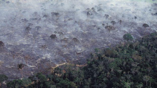 Quema de árboles en el bosque amazónico brasileño