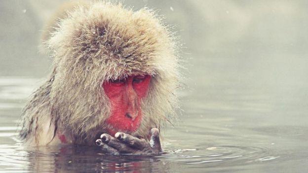 Un primate en el agua