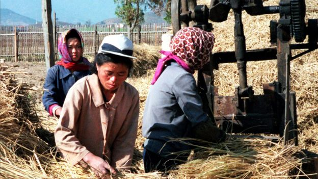 North Korean women tend to rice harvest in South Hamgyong province - photo taken in 1998