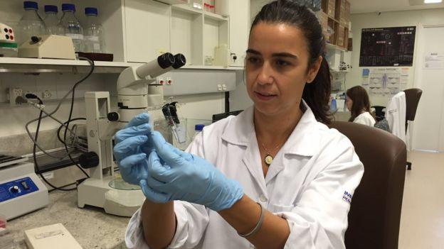Cinco apostas da ciência para combater zika e microcefalia