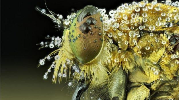 Muhammad Roem拍攝的一隻昆蟲超近距離特寫