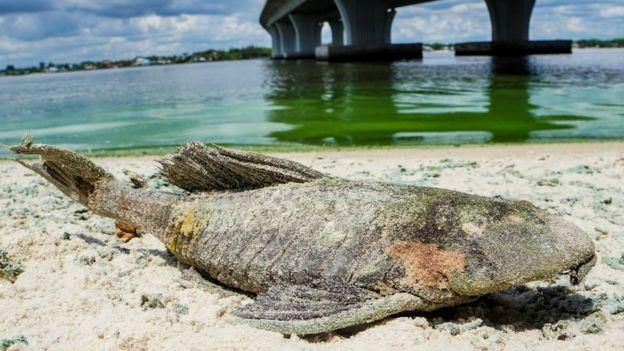 Peixe morto na areia