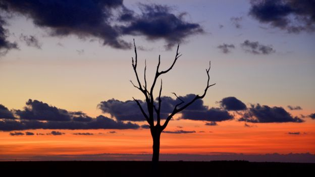 Skeleton tree at dusk