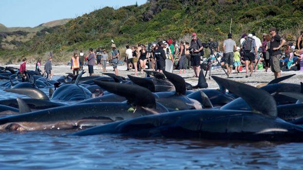 Ballenas varadas en la bahía Golden