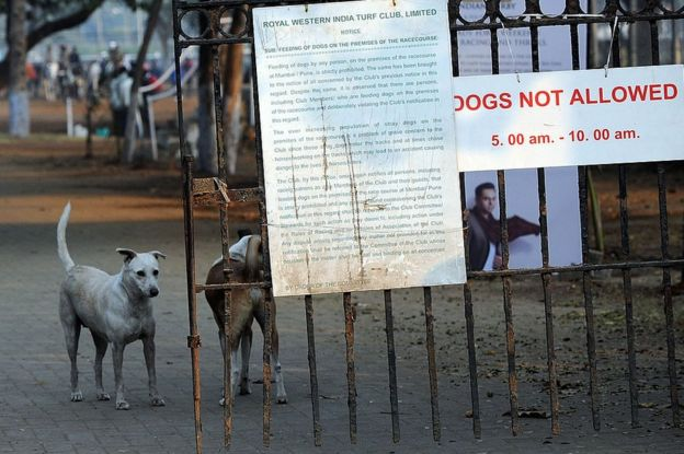 Mumbai stray dogs