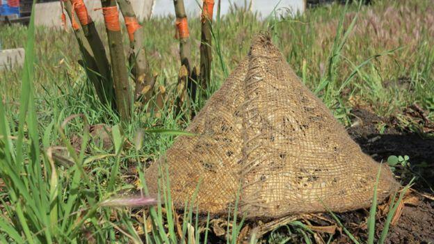 Cono incubador de semillas BioPatch