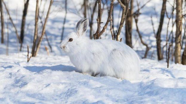 Un conejo en un paisaje nevado