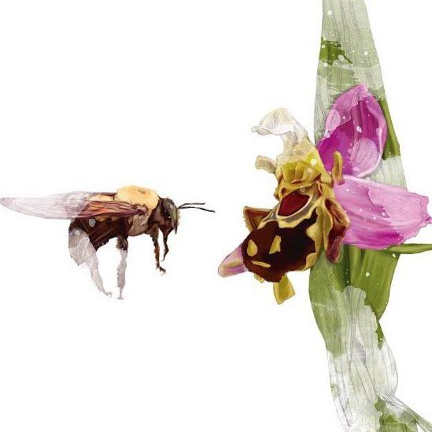 Ilustración de una abeja acercándose a una orquídea