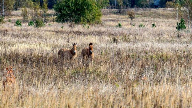 Отсутствие людей положительно сказывается на биоразнообразии - сегодня зона отчуждения населена самыми разными животными